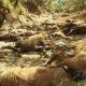 गर्मीका कारण अष्ट्रेलियामा घोडा मृत अवस्थामा फेला परे